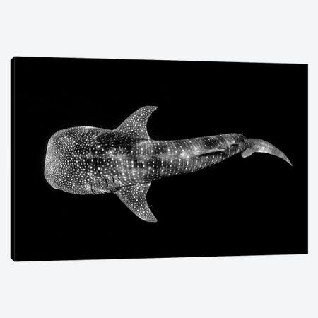 Whale Shark Ningaloo Reef Canvas Print #RNS73} by Jordan Robins Canvas Artwork