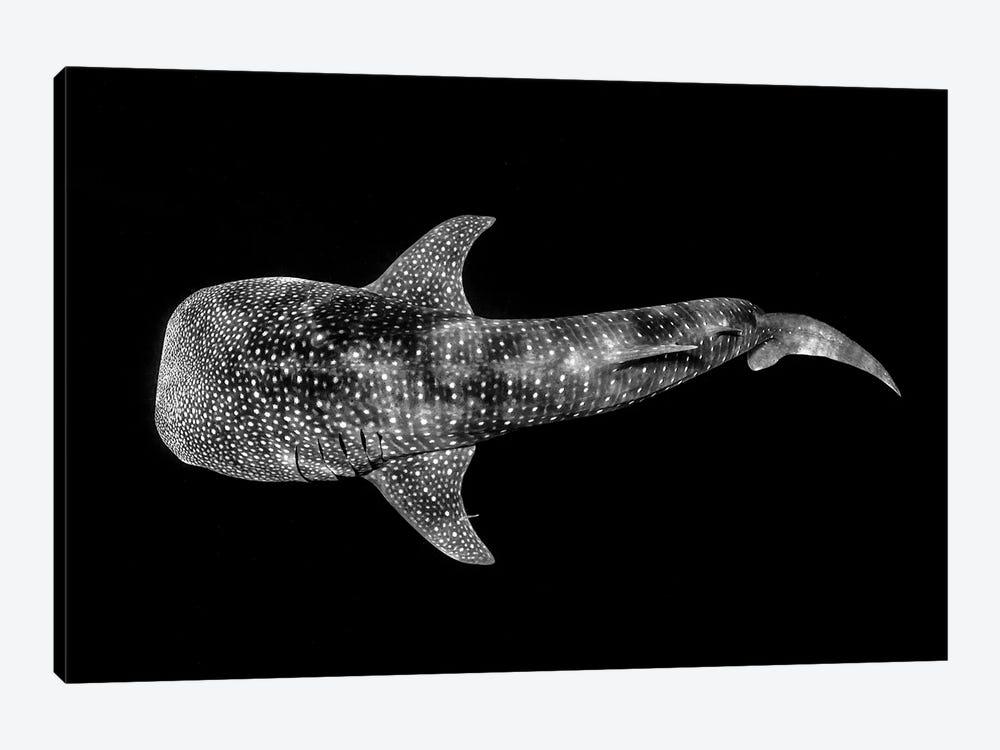 Whale Shark Ningaloo Reef by Jordan Robins 1-piece Art Print