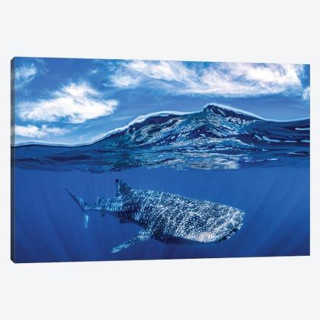 Whale Shark Over Under Canvas Print #RNS74} by Jordan Robins Canvas Print