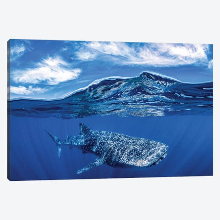 Whale Shark Over Under Canvas Print #RNS74} by Jordan Robins Canvas Print