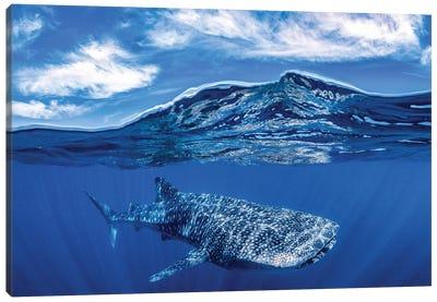 Whale Shark Over Under Canvas Art Print