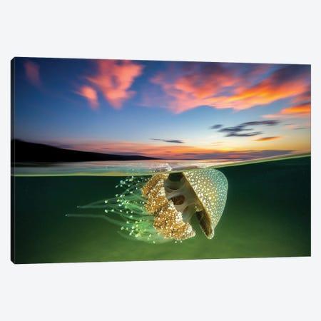 White Spotted Jellyfish Sunset Canvas Print #RNS76} by Jordan Robins Art Print