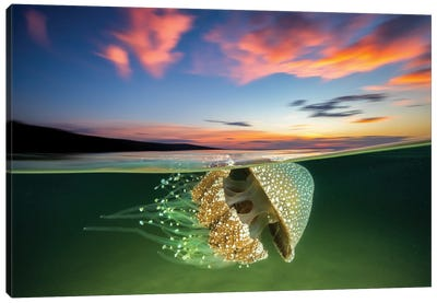 White Spotted Jellyfish Sunset Canvas Art Print