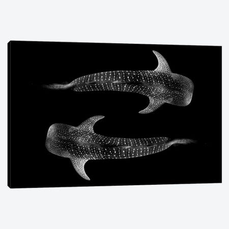 Yin & Yang Whale Shark Canvas Print #RNS77} by Jordan Robins Art Print