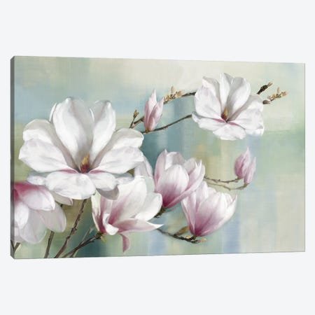 Magnolia Blooms Canvas Print #ROG5} by Rogier Daniels Canvas Wall Art