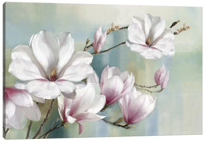 Magnolia Blooms Canvas Art Print