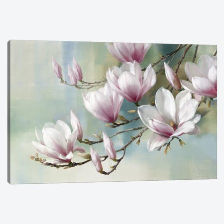 Magnolia Morning Canvas Print #ROG6} by Rogier Daniels Canvas Wall Art