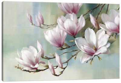 Magnolia Morning Canvas Art Print