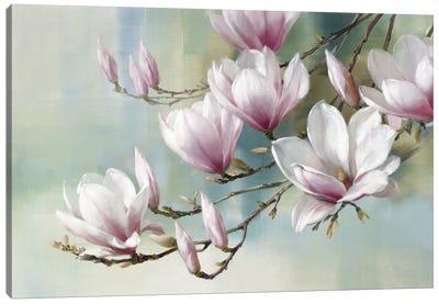 Magnolia Morning Canvas Art Print