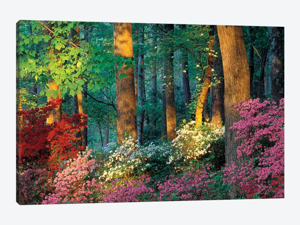 Overlook Azalea Garden, Callaway Gardens, Pine Mountain, Georgia, USA by Nancy Rotenberg 1-piece Art Print