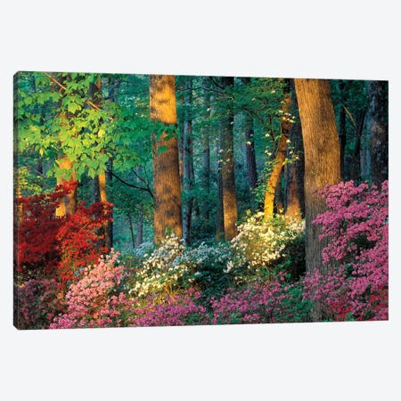 Overlook Azalea Garden, Callaway Gardens, Pine Mountain, Georgia, USA Canvas Print #ROT4} by Nancy Rotenberg Canvas Wall Art