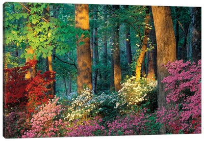 Overlook Azalea Garden, Callaway Gardens, Pine Mountain, Georgia, USA Canvas Art Print