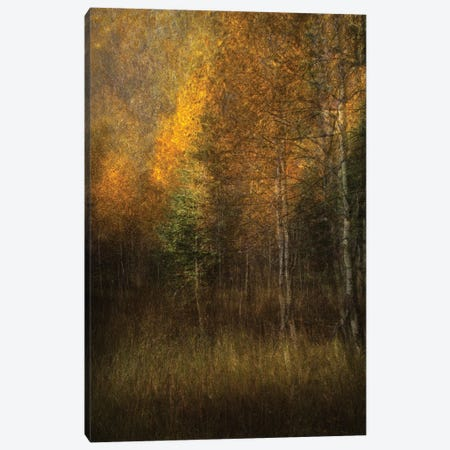 Woods Canvas Print #ROX5} by Roxana Labagnara Canvas Art