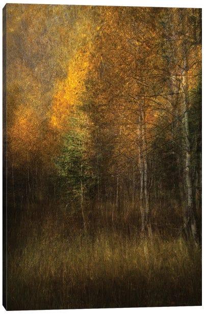 Woods Canvas Art Print