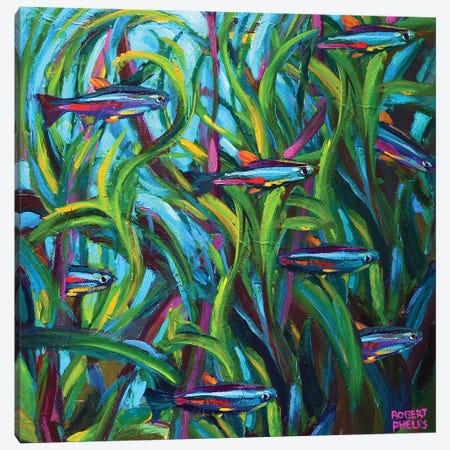 Neon Tetras Canvas Print #RPH102} by Robert Phelps Canvas Print