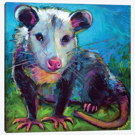Oppossum Canvas Print #RPH103} by Robert Phelps Art Print