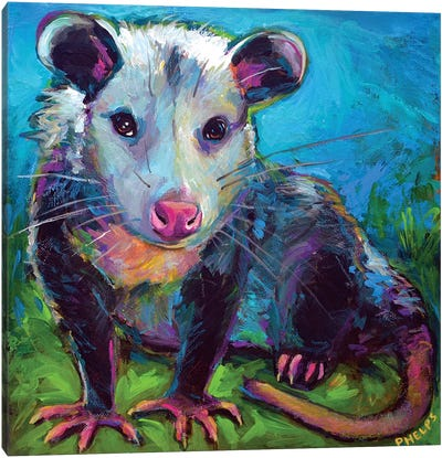 Oppossum Canvas Art Print