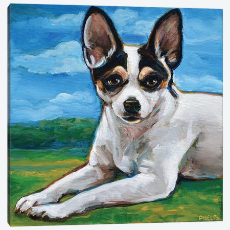 Rat Terrier Canvas Print #RPH104} by Robert Phelps Canvas Art