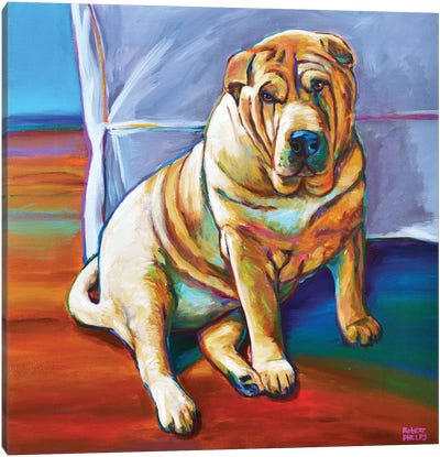 Shar-pei Canvas Art Print