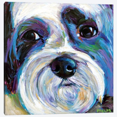 Shih Tzu Canvas Print #RPH106} by Robert Phelps Canvas Wall Art