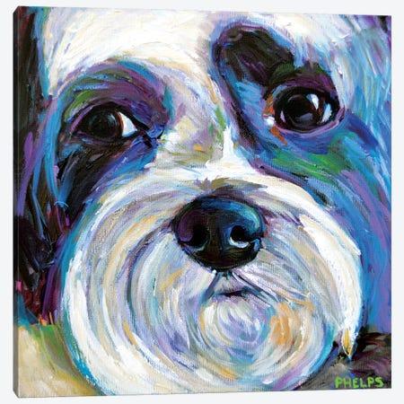 Shih Tzu Canvas Print #RPH106} by Robert Phelps Canvas Wall Art