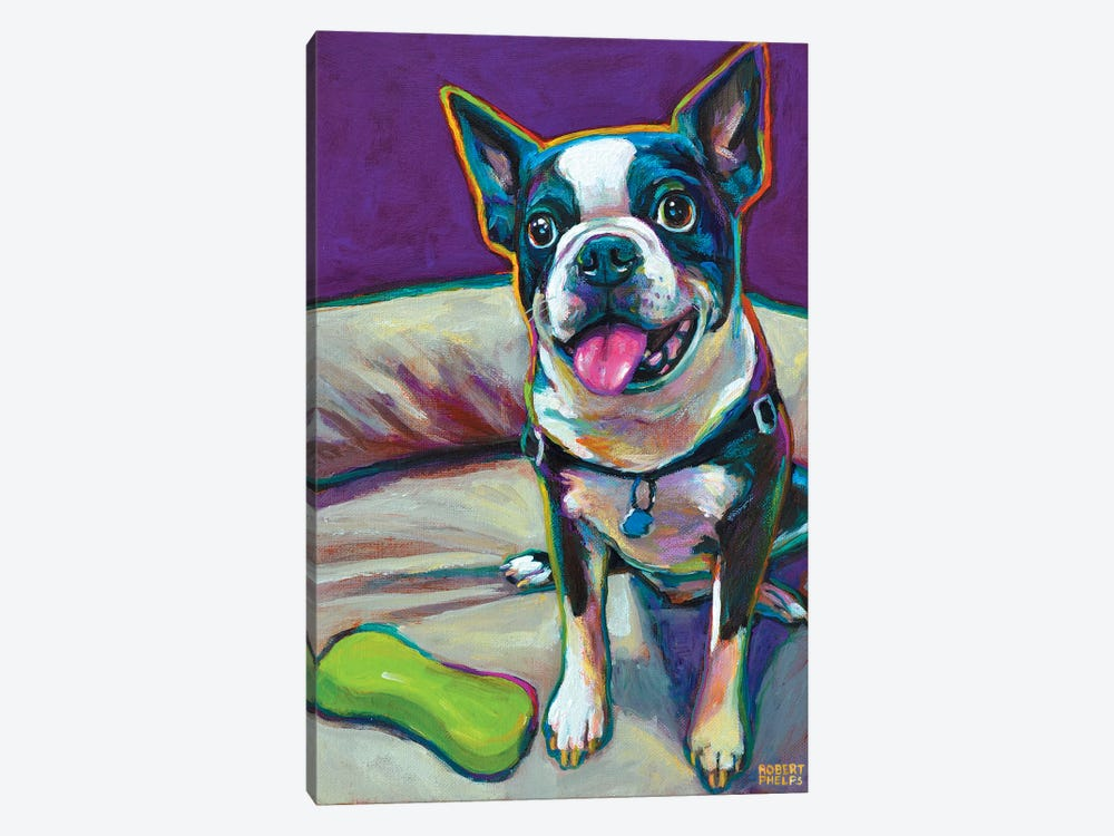 Boston Terrier And Toy by Robert Phelps 1-piece Art Print