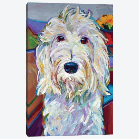 Willy the Schnoodle Canvas Print #RPH118} by Robert Phelps Canvas Art
