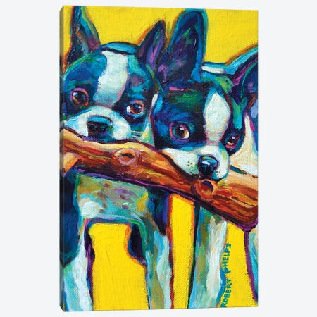 Boston Terrier Puppies Canvas Print #RPH11} by Robert Phelps Canvas Print