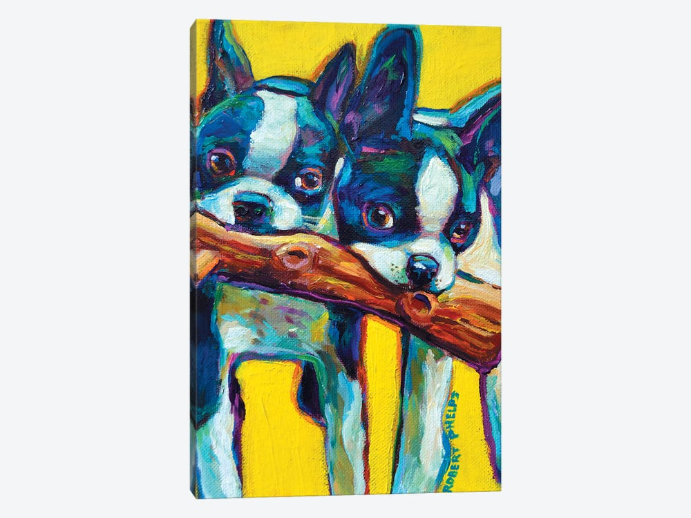 Boston Terrier Puppies by Robert Phelps 1-piece Canvas Art