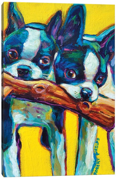 Boston Terrier Puppies Canvas Art Print