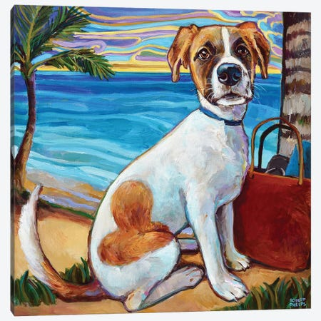Australian Shepherd In Aruba Canvas Print #RPH121} by Robert Phelps Canvas Art Print