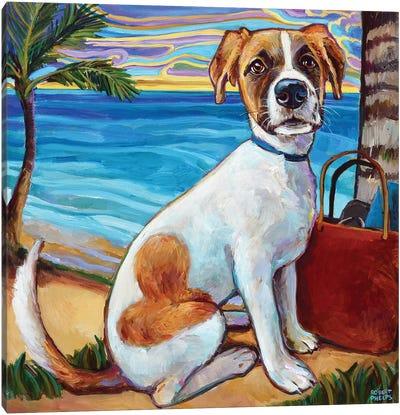 Australian Shepherd In Aruba Canvas Art Print