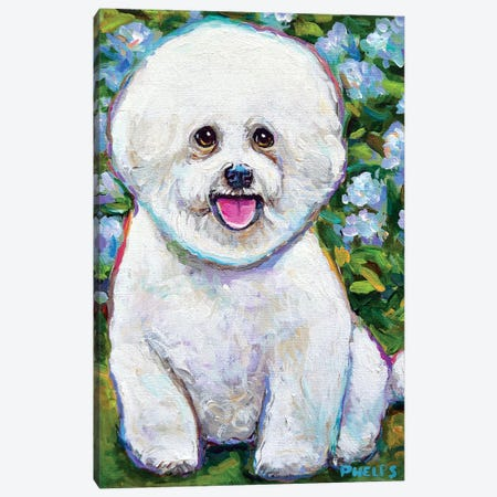 Bichon Frise And Blossoms Canvas Print #RPH123} by Robert Phelps Canvas Art Print