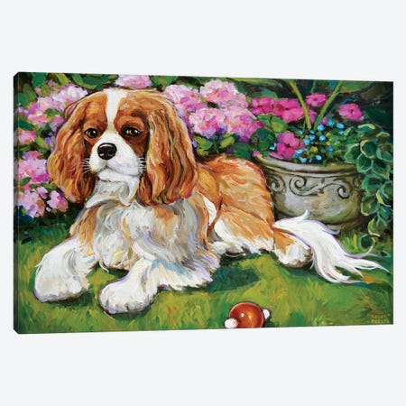 Cavalier King Charles Spaniel In The Garden Canvas Print #RPH126} by Robert Phelps Canvas Artwork