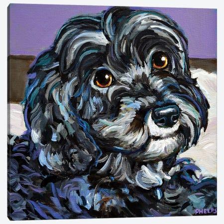 Cozy Black Schnoodle Canvas Print #RPH128} by Robert Phelps Art Print