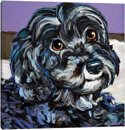 Cozy Black Schnoodle Canvas Art Print