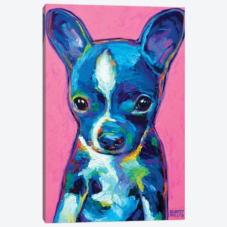 Boston Terrier Puppy Canvas Print #RPH12} by Robert Phelps Canvas Art Print