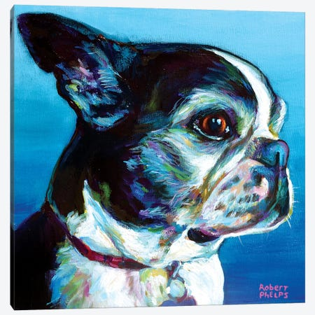 Gimli The Boston Terrier Canvas Print #RPH130} by Robert Phelps Canvas Wall Art