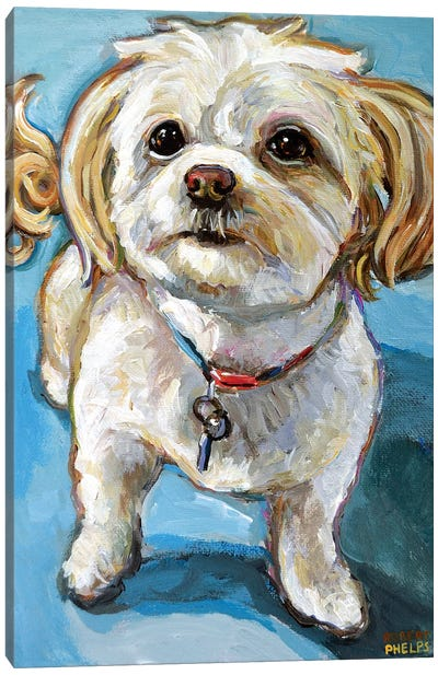 Murphy The Maltipoo Canvas Art Print
