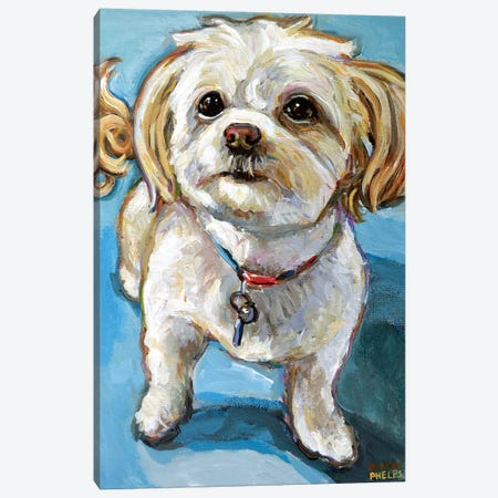 Murphy The Maltipoo Canvas Print #RPH133} by Robert Phelps Canvas Artwork