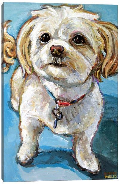 Murphy The Maltipoo Canvas Art Print