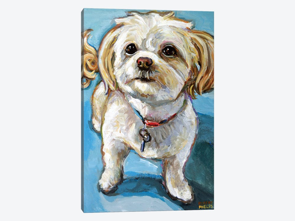 Murphy The Maltipoo by Robert Phelps 1-piece Canvas Art Print