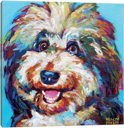 Olivia The Aussie Doodle Canvas Art Print