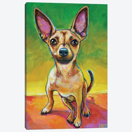 Ollie The Chihuahua Canvas Print #RPH136} by Robert Phelps Art Print