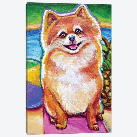 Poolside Pomeranian Pup Canvas Print #RPH137} by Robert Phelps Canvas Art Print