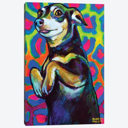 Punk Rock Dachshund Canvas Print #RPH139} by Robert Phelps Canvas Artwork