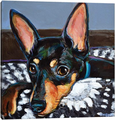 Stan The Miniature Doberman Pinscher  Canvas Art Print