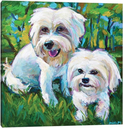 Maltese Puppies In The Park Canvas Art Print