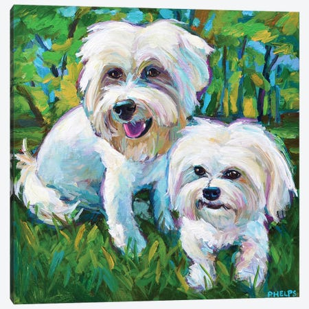 Maltese Puppies In The Park Canvas Print #RPH147} by Robert Phelps Canvas Art