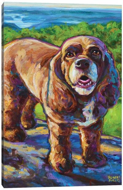 Mountain Spaniel Canvas Art Print